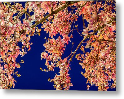 Magnolia - Redlight  Metal Print by Susan Cole Kelly Impressions