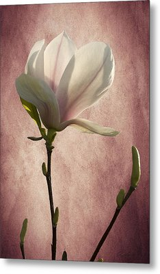 Magnolia Metal Print by Ann Lauwers
