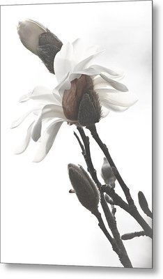 Metal Print featuring the photograph Magnolia Bloom by Tammy Schneider