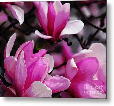 Magnolia Blossoms Metal Print by Olivia Hardwicke