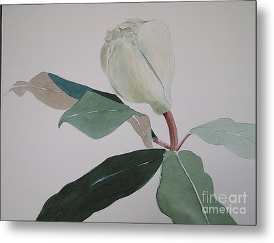 Metal Print featuring the painting Magnolia Bud by Nancy Kane Chapman