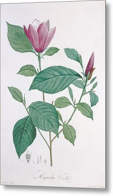 Magnolia Discolor Engraved By Legrand Metal Print by Henri Joseph Redoute