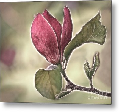 Magnolia Glow Metal Print by Susan Candelario