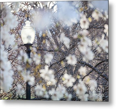 Magnolia Impression 1 Metal Print by Susan Cole Kelly Impressions