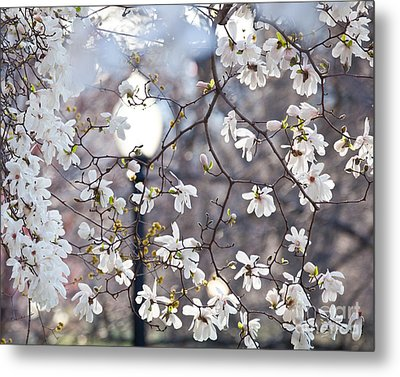 Magnolia Impression 2 Metal Print by Susan Cole Kelly Impressions