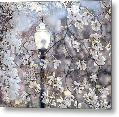 Magnolia Impression Blend Metal Print by Susan Cole Kelly Impressions