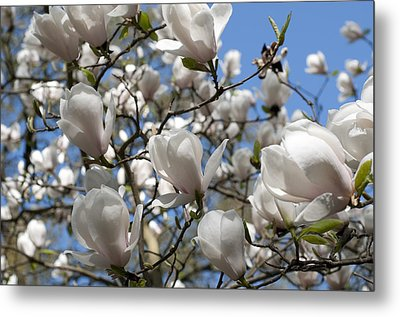 Metal Print featuring the photograph Magnolia by Lana Enderle