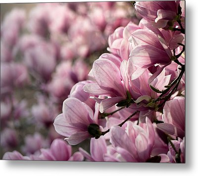 Magnolia Layers 2 Metal Print