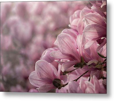 Magnolia Layers Metal Print