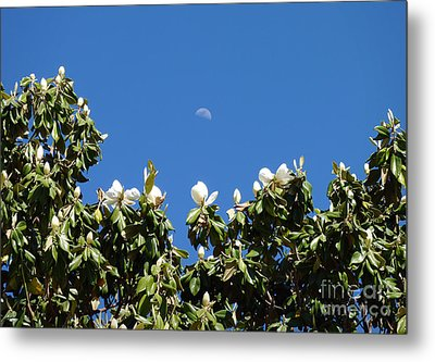 Metal Print featuring the photograph Magnolia Moon by Meghan at FireBonnet Art