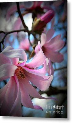 Magnolia Morning Metal Print