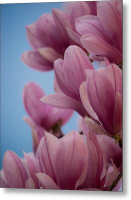 Magnolia On Blue Sky Metal Print