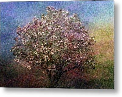 Magnolia Tree In Bloom Metal Print by Sandy Keeton