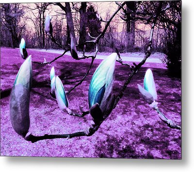 Magnolias In An Alien World Metal Print by Shawna Rowe