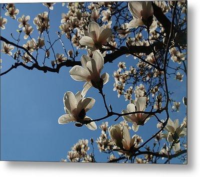 Magnolias Metal Print by Rita Haeussler