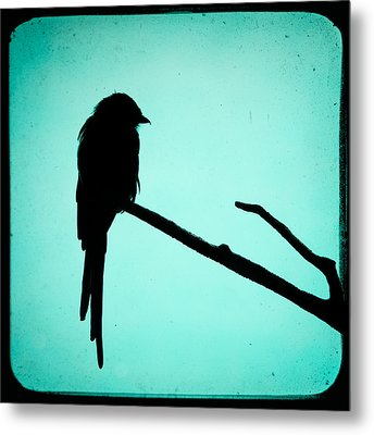 Magpie Shrike Silhouette Metal Print by Gary Heller