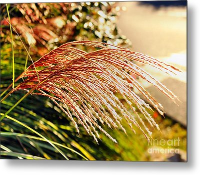 Maiden Seagrass Flower Head Metal Print