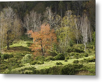 Maine Hillside Landscape In Fall Metal Print by Keith Webber Jr