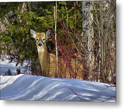 Maine Wildlife 2 Metal Print