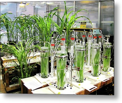 Maize Laboratory Research Metal Print by Eric Schmelz/us Department Of Agriculture