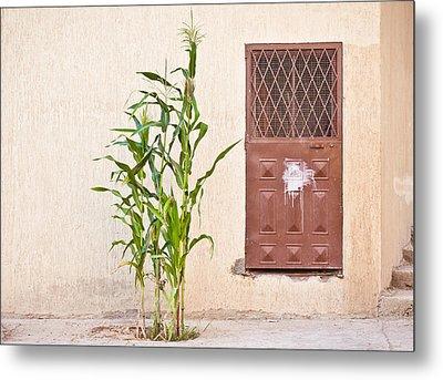 Maize Plant Metal Print