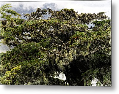 Metal Print featuring the photograph Majestic Branches by Davina Washington
