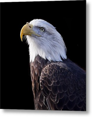 Majestic Eagle Metal Print