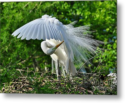 Metal Print featuring the photograph Majestic Egret by Kathy Baccari