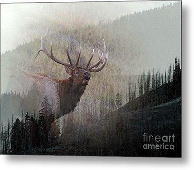 Majestic Elk Metal Print by Clare VanderVeen