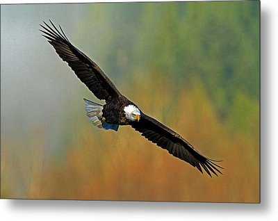 Majestic Flight Metal Print