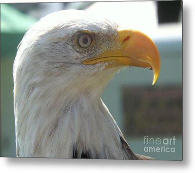 Majestic Icon Metal Print