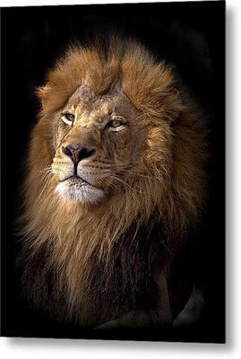 Majestic In Color Metal Print