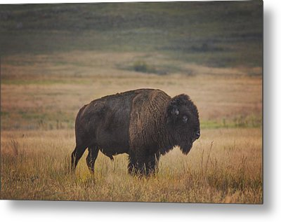 Majestic Metal Print by Kimberly Danner
