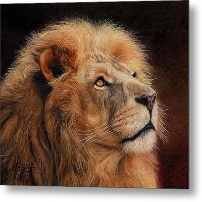 Majestic Lion Metal Print by David Stribbling