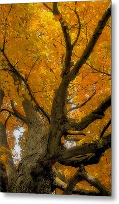 Metal Print featuring the photograph Majestic Maple by Gary Hall