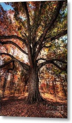 Majestic Oak - Autumn In Greensboro I Metal Print by Dan Carmichael