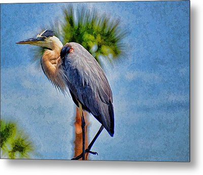 Metal Print featuring the photograph Majestic Tri-colored Heron by Pamela Blizzard