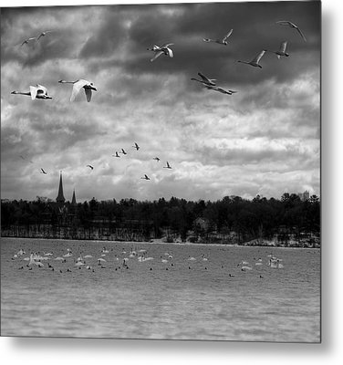 Major Migration Metal Print