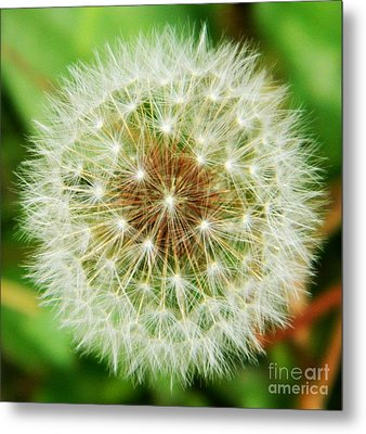 Make A Wish Metal Print by Andrea Anderegg