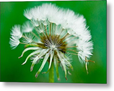 Metal Print featuring the photograph Make A Wish by Annette Hugen