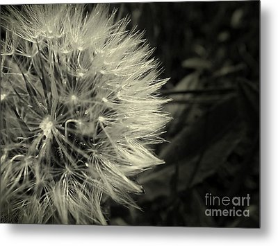 Metal Print featuring the photograph Make A Wish by Clare Bevan
