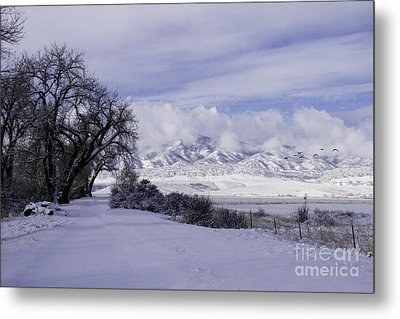 Metal Print featuring the photograph Making First Tracks by Kristal Kraft