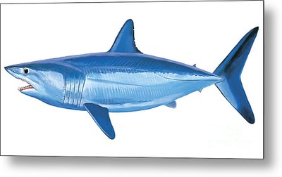 Mako Shark Metal Print by Carey Chen