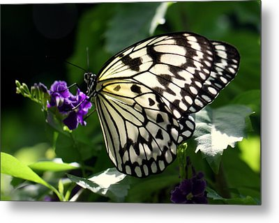 Metal Print featuring the photograph Malabar Tree Nymph  by Suzanne Stout
