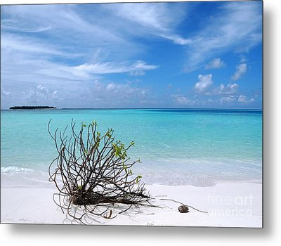 Maldives 12 Metal Print by Giorgio Darrigo