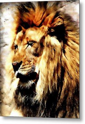 Male African Lion Metal Print by Jennifer Muller