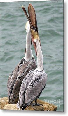 Male Brown Pelican Neck Exercise Metal Print by Darleen Stry