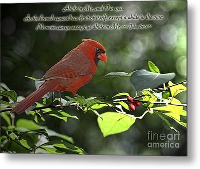 Male Cardinal On Dogwood Branch With Verse Metal Print