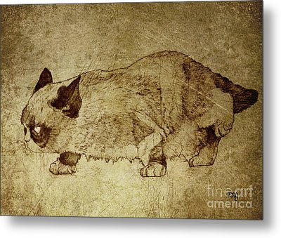 Male Cat Hunts At Night Metal Print by Daniel Yakubovich