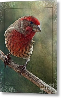 Male Housefinch With Green Texture And Decorations Metal Print by Debbie Portwood